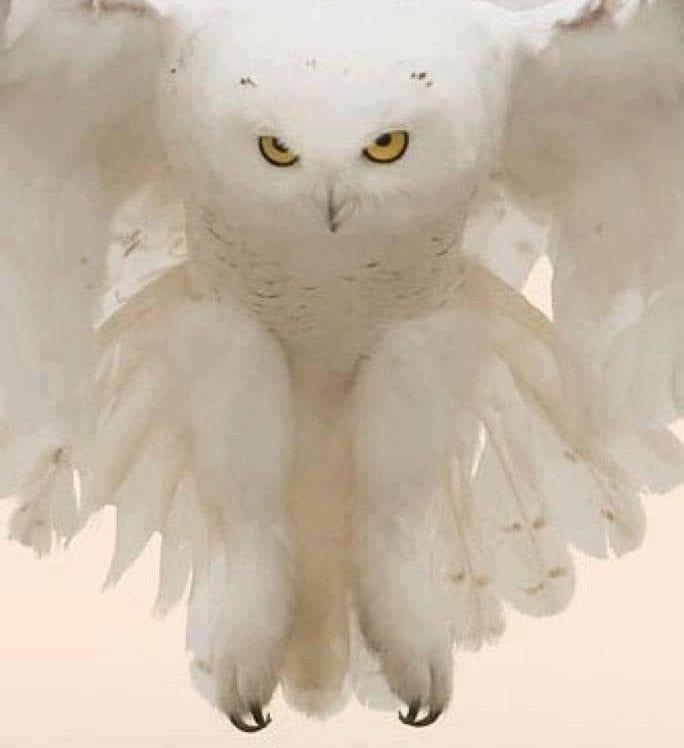 witte uit spirit